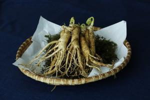 Ginseng Nootropic